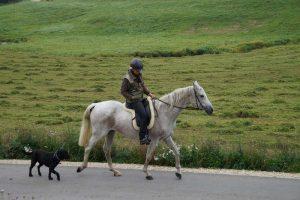 Shagya-Araber Stute Newa beim Ausritt