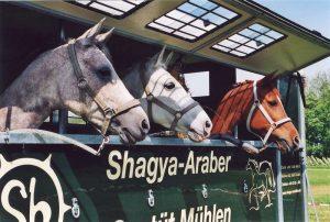 Transport-Service des Shagya-Araber Gestüt Mühlen